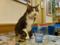 Cats of Xiao Mao Hua Yuan, #7096