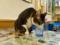 Cats of Xiao Mao Hua Yuan, #7103