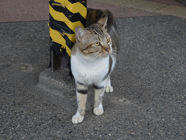 Cats of Houtong, #7113