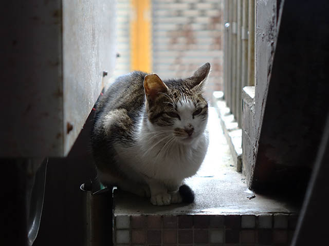 Cats of Houtong, #7115