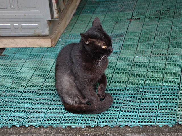 Cats of Houtong, #7118