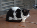 Cats of Houtong, #7121