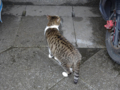 Cats of Houtong, #7130