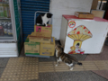 Cats of Houtong, #7134