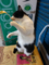 Cats of Houtong, #7141