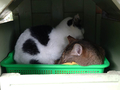 Cats of Houtong, #7158