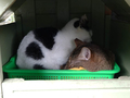 Cats of Houtong, #7159