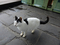 Cats of Houtong, #7161