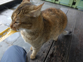 Cats of Houtong, #7168