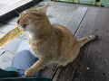 Cats of Houtong, #7170