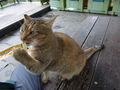 Cats of Houtong, #7172