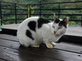 Cats of Houtong, #7174