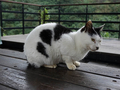 Cats of Houtong, #7175