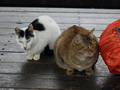 Cats of Houtong, #7176