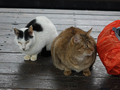 Cats of Houtong, #7177