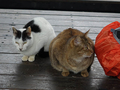 Cats of Houtong, #7178