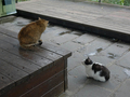 Cats of Houtong, #7186