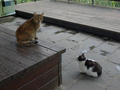 Cats of Houtong, #7187