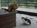 Cats of Houtong, #7188