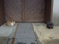Cats of Houtong, #7196