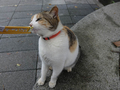 Cats of Houtong, #7213