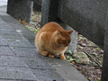 Cats of Houtong, #7225
