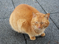 Cats of Houtong, #7230