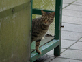 Cats of Houtong, #7238