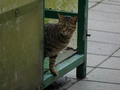 Cats of Houtong, #7239