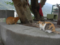 Cats of Houtong, #7240