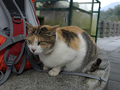 Cats of Houtong, #7243