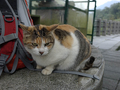 Cats of Houtong, #7244