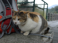 Cats of Houtong, #7245