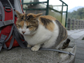 Cats of Houtong, #7246