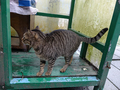 Cats of Houtong, #7247