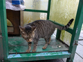 Cats of Houtong, #7248