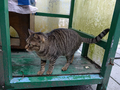 Cats of Houtong, #7249