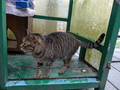 Cats of Houtong, #7250