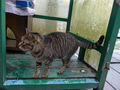 Cats of Houtong, #7251