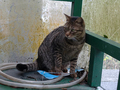 Cats of Houtong, #7252