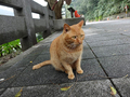 Cats of Houtong, #7258