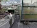 Cats of Houtong, #7275