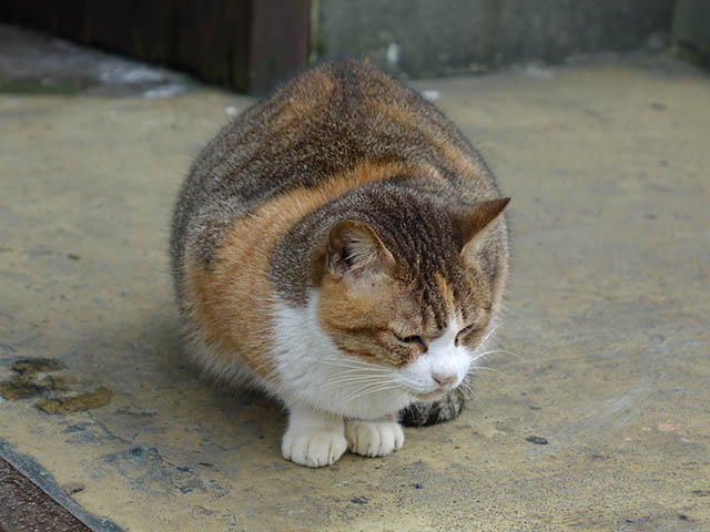 Cats of Houtong, #7335