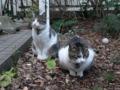 Yuki & Koyuki, #7418
