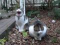Yuki & Koyuki, #7422