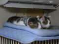 Umi & Koumi, #7439