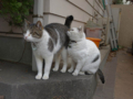 Sora & Yuki, #7515