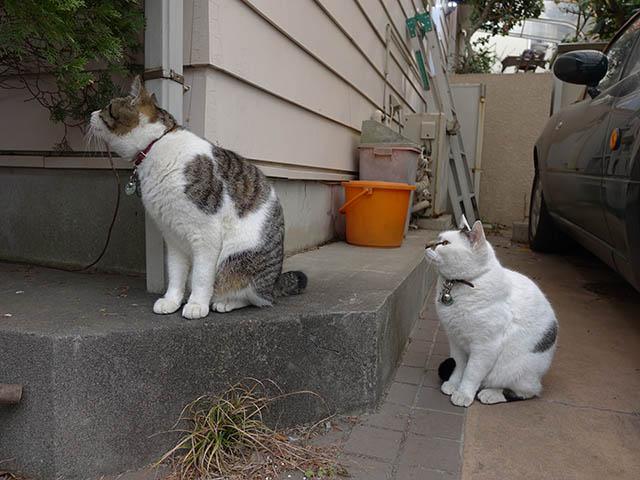 Sora & Yuki, #7517