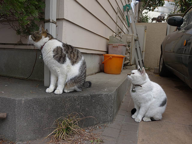 Sora & Yuki, #7518