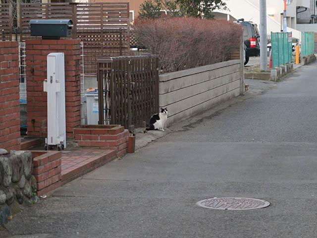 Cat of Back Lane, #1146